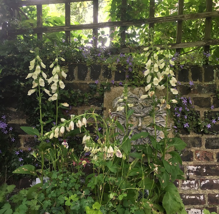 25 Years in Dry Dappled Shade